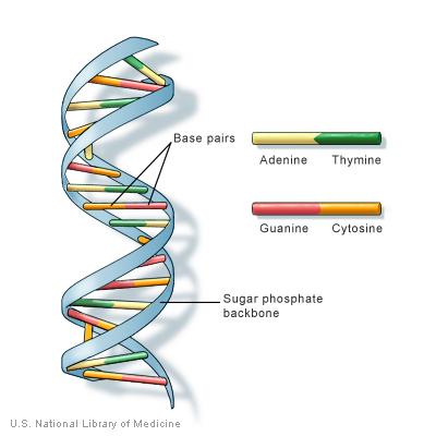 GMOZ + RNA=DNA