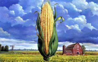 GMOZ Corn the New Contraceptive