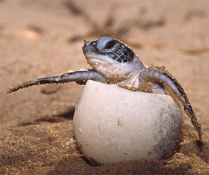 Turtle Wisdom reborn