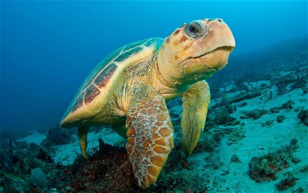 Turtle Wisdom