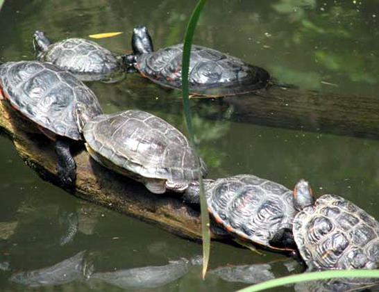 Turtle Wisdom Relax we got time