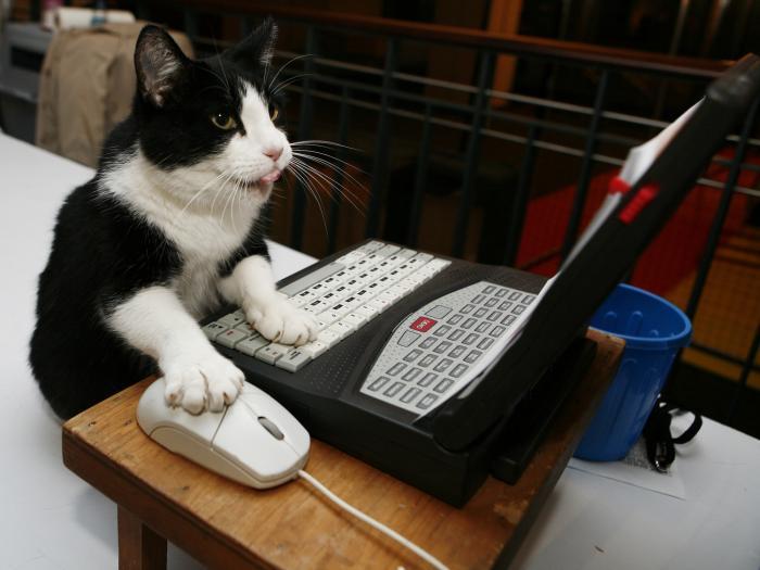 Computer HumanHere Kitty Kitty