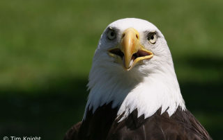 The Eagle and the Recapitulation