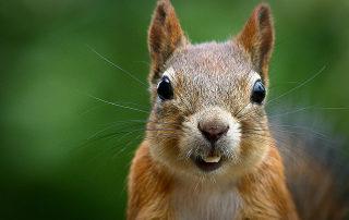 Squirrel Medicine
