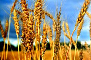 Monsanto GMOZ News Flash