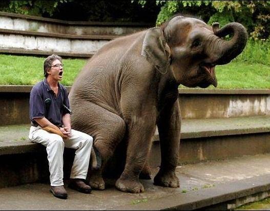 Yawning Elephant