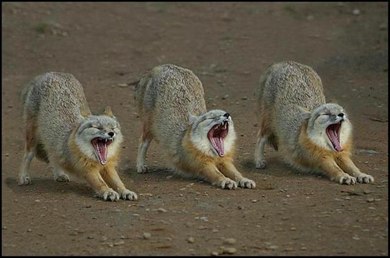 Triple Contagious Yawn