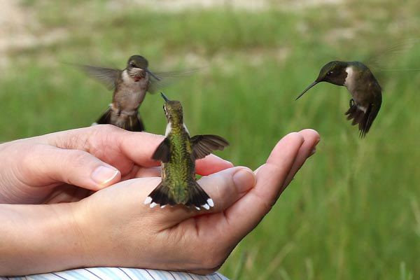 Hummingbirds touching you