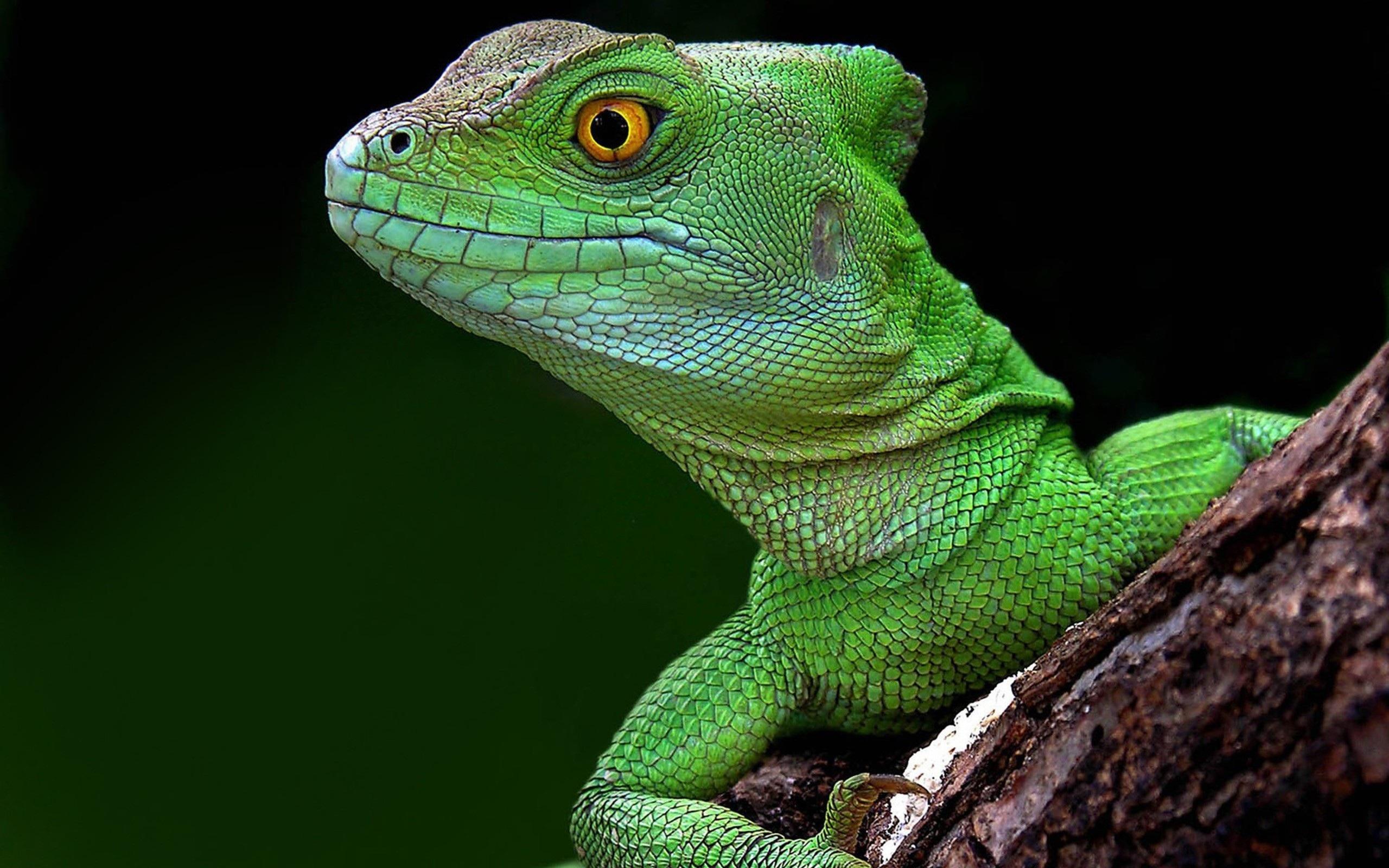 Annunaki Lizard Medicine