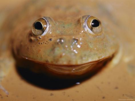 Contrary Frog Medicine