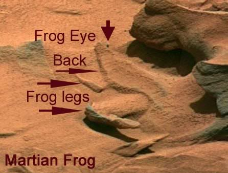 Frogs on Mars