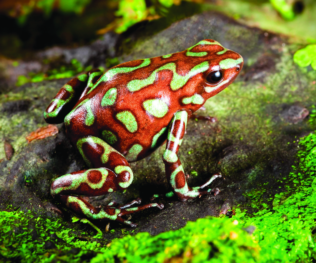 Frog medicine to retrieve hidden wisdom ancient mysteries frogs can be used for medicine good and bad biocorpaavc Images