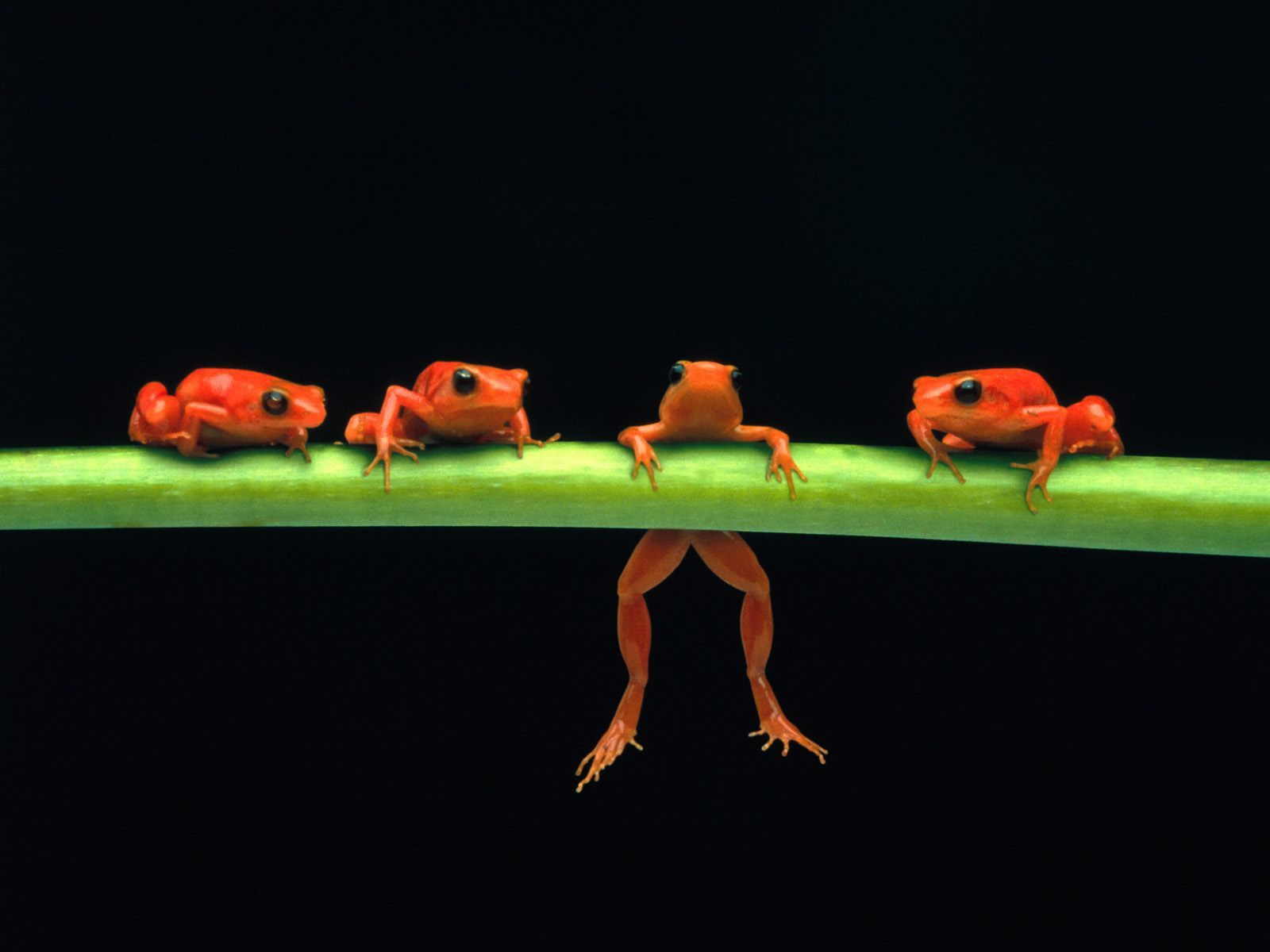 Frogs hanging around