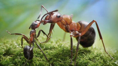 Ant-Friends