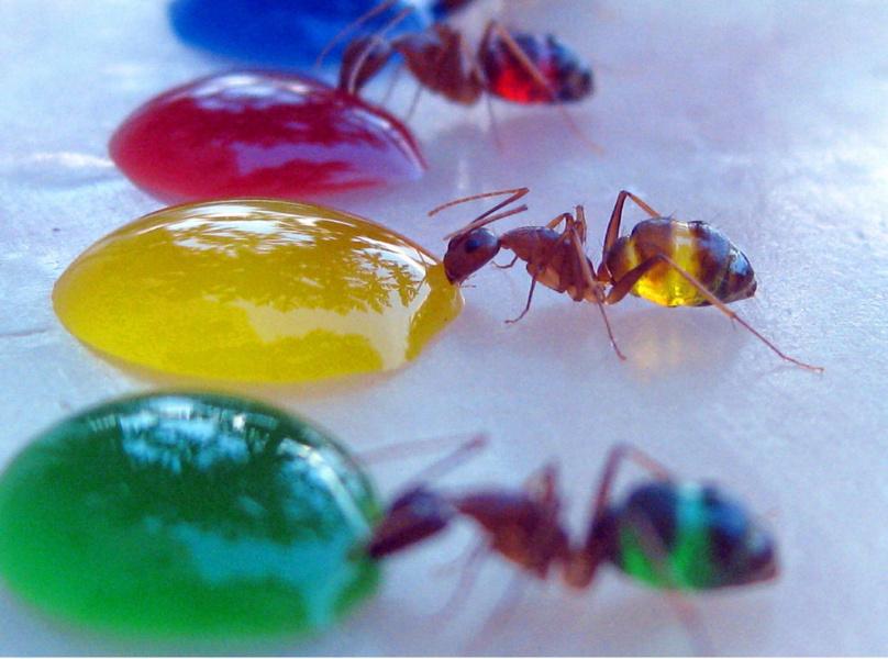 Ant Medicine