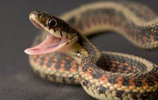 Snake Medicine