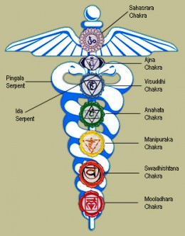Snake Symbolism The power of Snake Medicine
