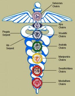 Snake Symbolism The power of Snake Medicine