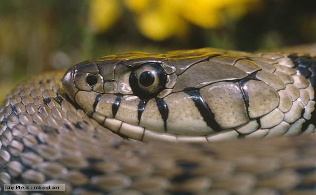 Snake Medicine is Transmutation