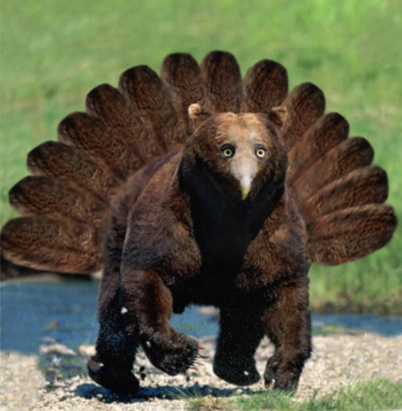 Turkey Bear