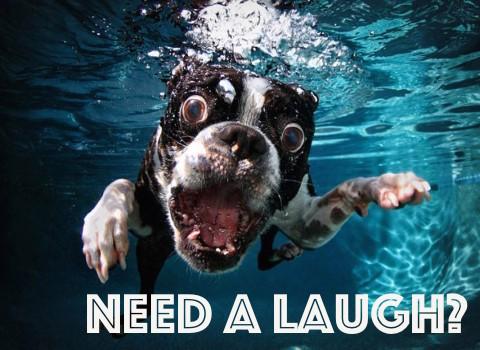 need-a-laugh